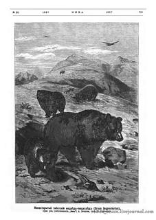 Niva 1887_0713