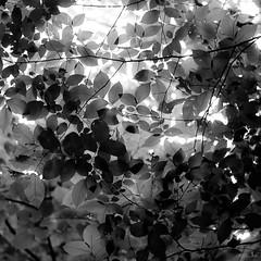 Up Through Trees