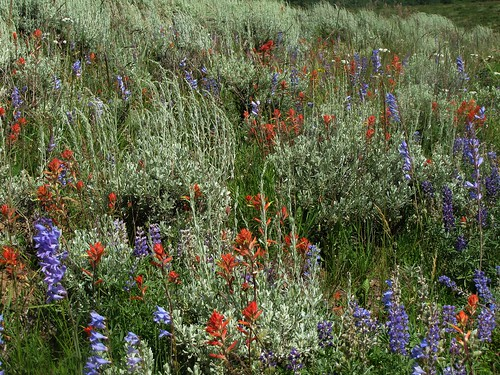 flowers rural colorado highdesert wildflowers uncompahgreplateau