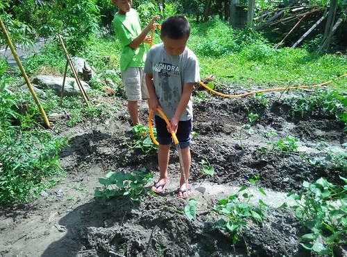 下田社孩子在田地裡快樂地澆水。圖片提供:陳慶元。