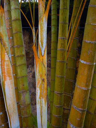 A stand of bamboo in a Royal Tomb garden in Hue, Vietnam