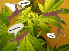 flower(0.0), produce(0.0), food(0.0), urtica(0.0), leaf(1.0), plant(1.0), cannabis(1.0), herb(1.0),