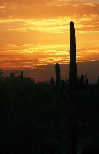 sunset arizona cactus nature phoenix bravo outdoor saguaro interestingness196 i500 specnature
