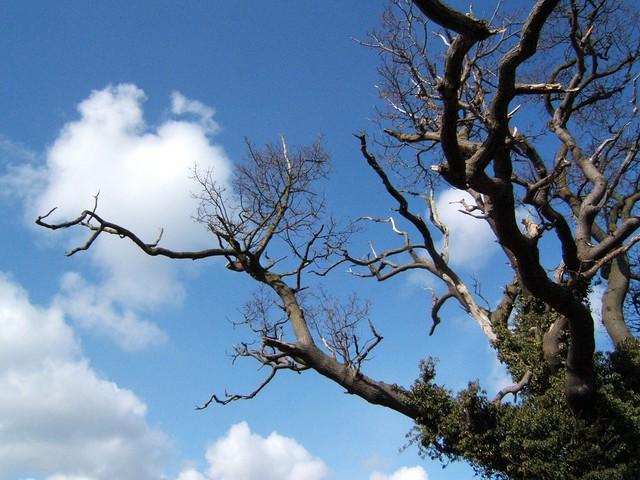 Tree @ Blundeston, Suffolk
