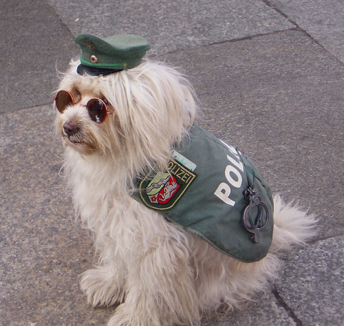 German police dog... Cologne 2004