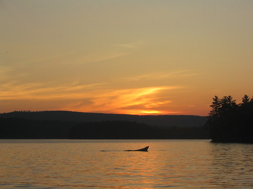 sunset usa rock geotagged pond great maine whale geotoolyuancc jemweald geolat4456589 geolon69856482