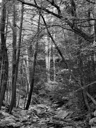 trees blackandwhite virginia rocks stream forrest shenandoahvalley movingwater naturescene calendarshots theworldthroughmyeyes easternnorthamericanature top10nature blackandwhitenature markschurig
