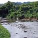 Going Back to Nature. Pellejas River, Adjuntas, Puerto Rico