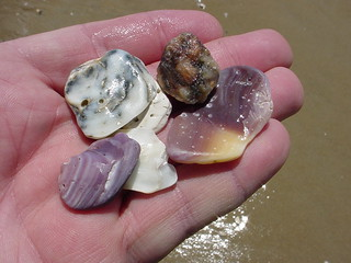 Treasures from the sea.