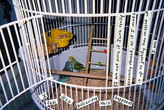 outdoor structure(0.0), dog crate(0.0), cage(1.0), pet(1.0), parakeet(1.0), animal shelter(1.0),