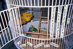 cage, pet, parakeet, animal shelter,