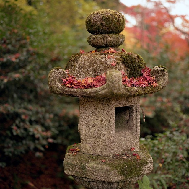 leaf sheeted the stone lantern