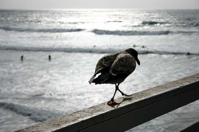 Bird and surfers