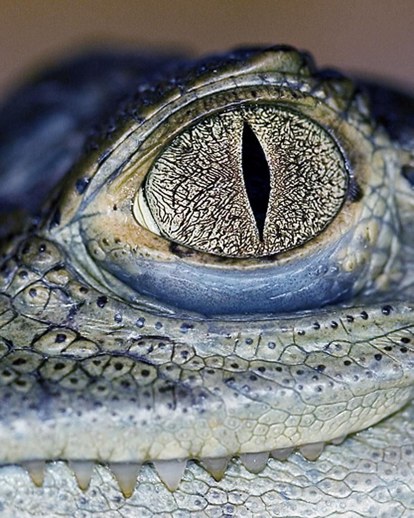ba0c6a814b9fe ... Cayman Eyes and Teeth