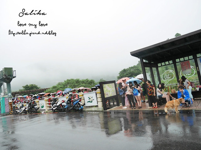 陽明山竹子湖免費繡球花愛情花 (7)