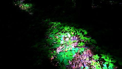 shadow nature forest hungary szekszárd tolnamegye sötétvölgy