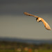 Storm Brewing by birdtracker