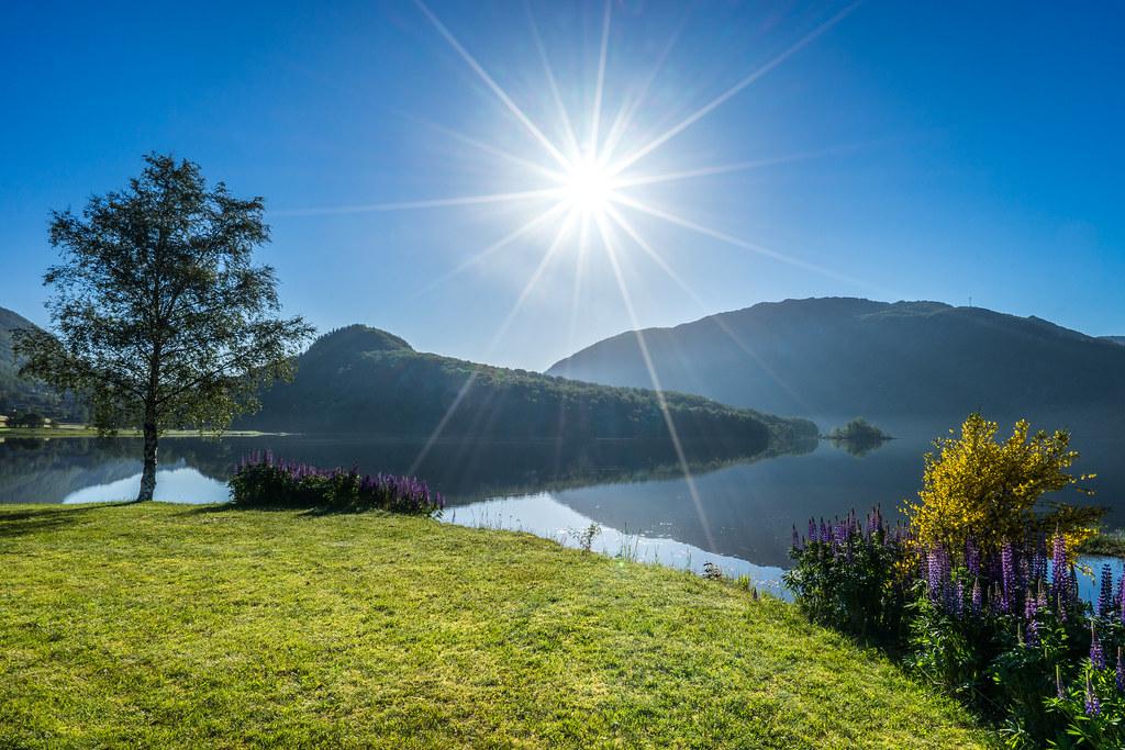 Sunny morning | Richard Larssen | Flickr