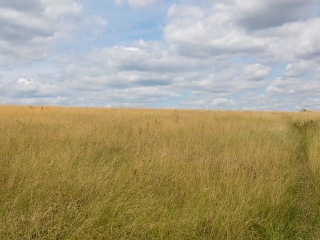 London prairie