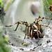 Funnel - web Spider by vampiremoi