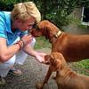 Twice the welcome home for @chrisjordan98 from India #vizsla #vizslagram #vizslaoftheday #vizslasofinstagram #velcrodog #wirehairedvizsla