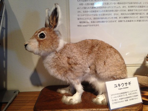 rishiri-island-rishiri-museum-stuffed-animal