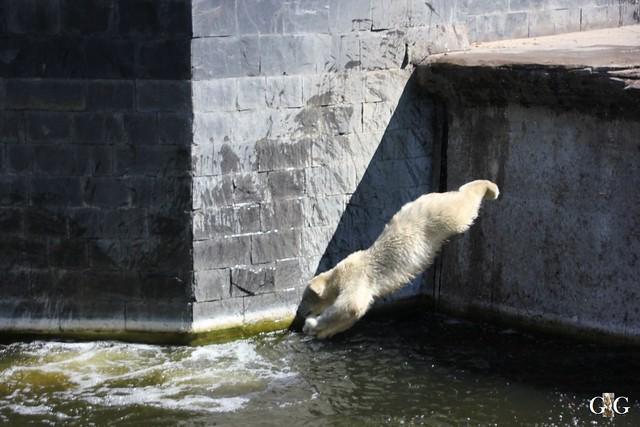 Ausflug Zoo Rostock 11.07.201517