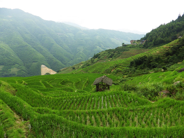 rizières et maisonette