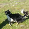 Where did that stick go???? #happydog