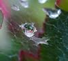 Wep Drops. by Omygodtom