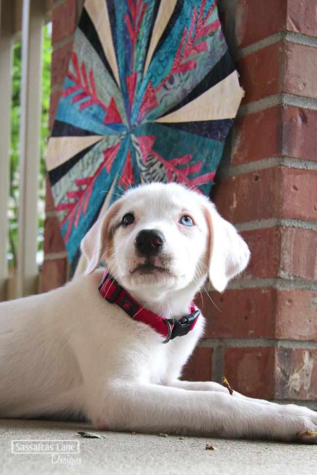 Meet Elsie!