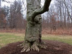 animal-like trunk