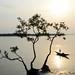 Beautiful Bangladesh by Zubayer Ahmed
