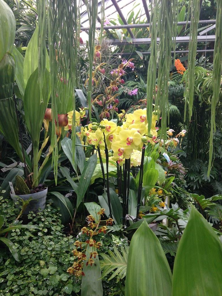 Orchidarium de Prangins 18683945404_9713de6792_b