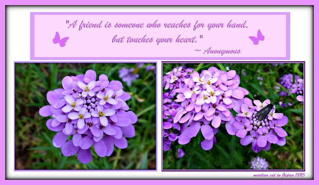 """A friend is someone who reaches for your hand, but touches your heart."""