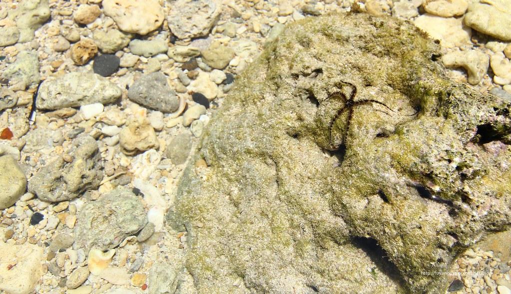 花瓶岩 (17)