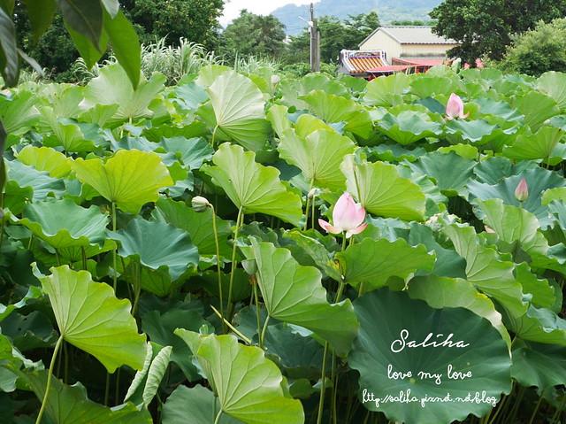 三峽蓮花景點 (19)