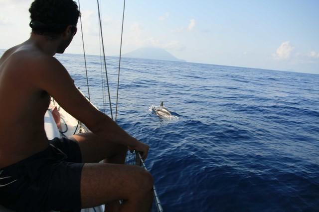dauphins Stormboli
