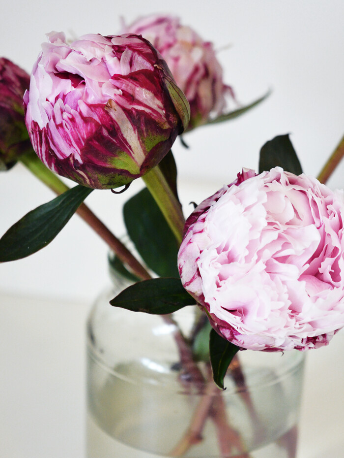 why do bloggers love peonies