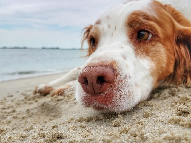 Dogs in Virginia State Parks