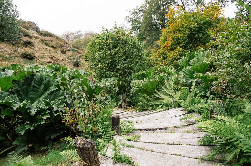 Arboretum de la Sédelle -écotourisme Creuse - carnet de voyage France