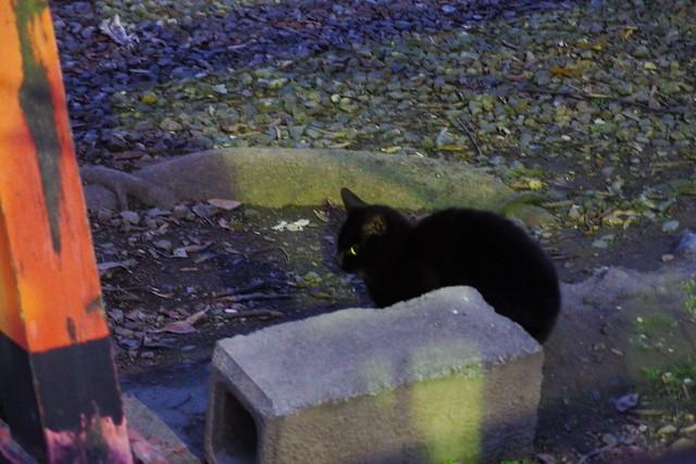 Today's Cat@2017-02-25