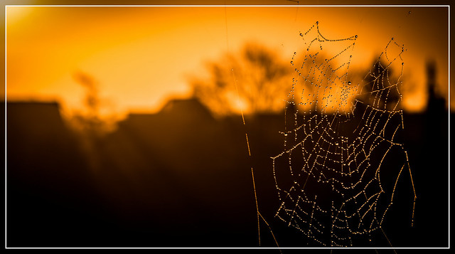 Spiderweb Pearls