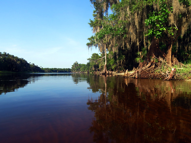 St. Johns River at Hickory Bluff