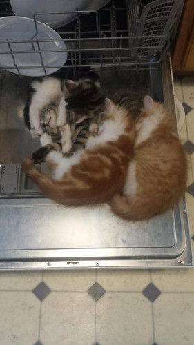 Silly kittens fell asleep on the dishwasher door.