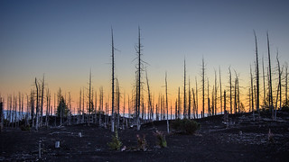 Dead Forest at Dusk