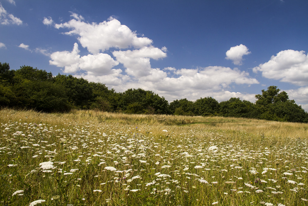 Meadow on the nature reserve