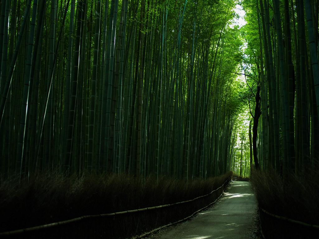 Kyoto Travel㊲