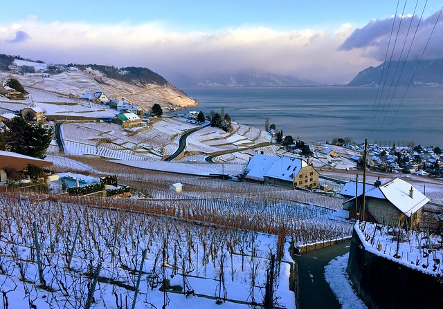 Greetings from the Lavaux