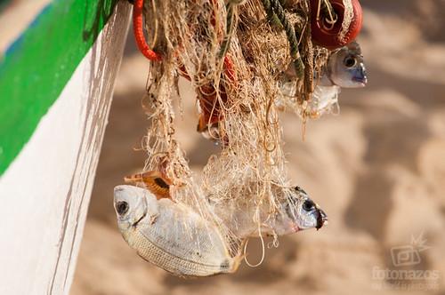 Los pescadores de La Antilla